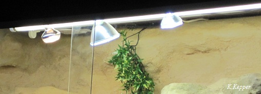 Uv Uv Terrarium Bartagamen Lampe Lampe Lampe Lampe Terrarium Uv Uv Bartagamen Terrarium Bartagamen DHYW9eE2I