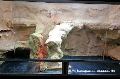 luftfeuchtigkeit bartagamen terrarium